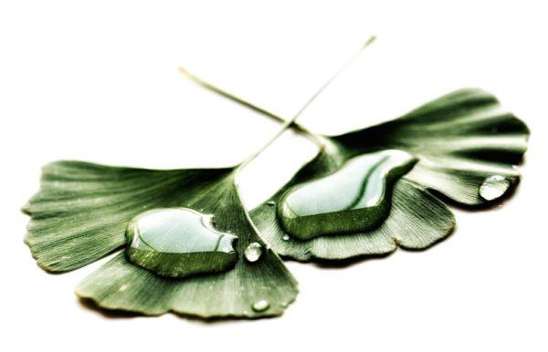 Tebonin gegen Tinnitus? Was Sie über Ginkgo-Mittel unbedingt wissen sollten